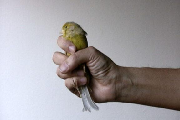 Julieta María, Bird 2010 video still